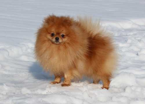 что делать, если собаку рвет белой пеной